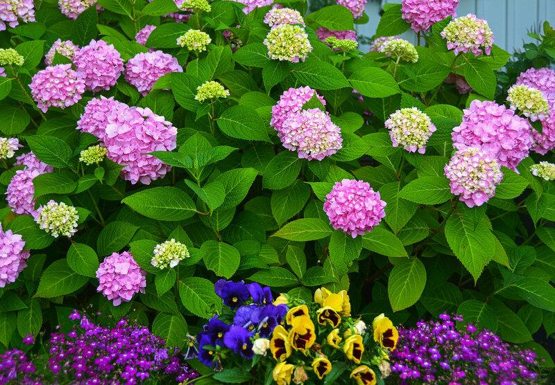 Цветочный сад - мой дивный сад