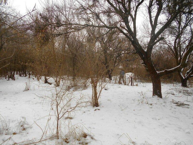 В лесу предновогоднем, 31 декабря ... DSCN0822.JPG