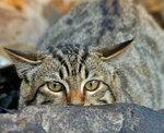 Котяка - взасадесидяка