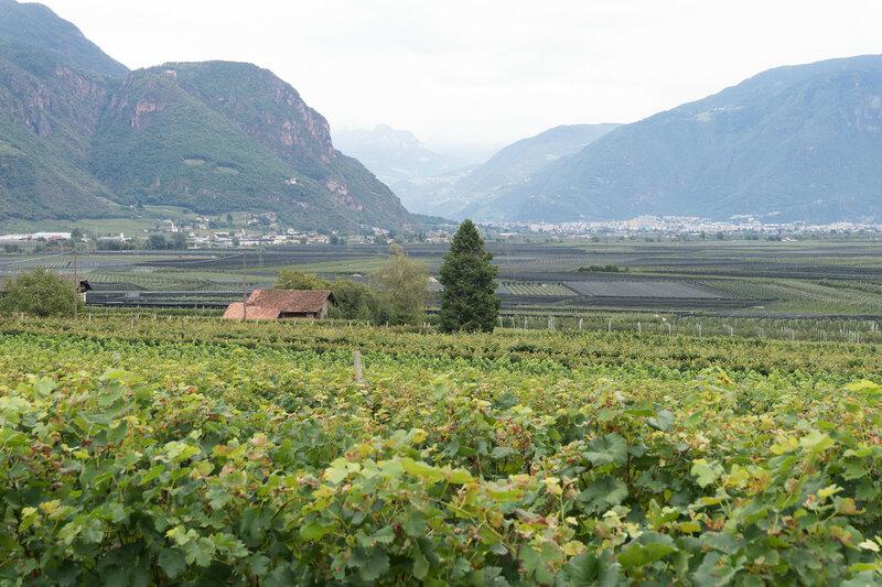 виноградники в Мерано, Альпы, Италия
