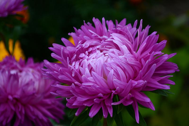 цветы дождь 21.jpg