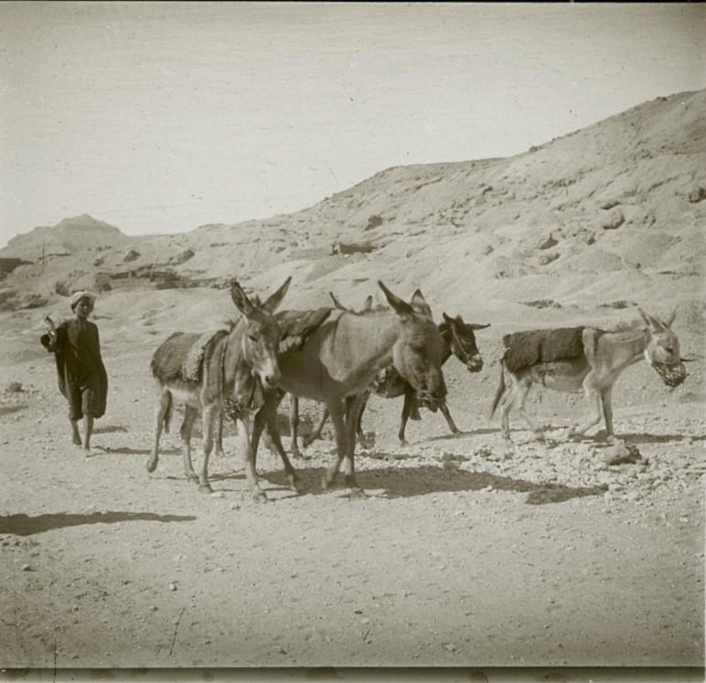 1910. Маленькие труженики. Египет, окрестности Луксора