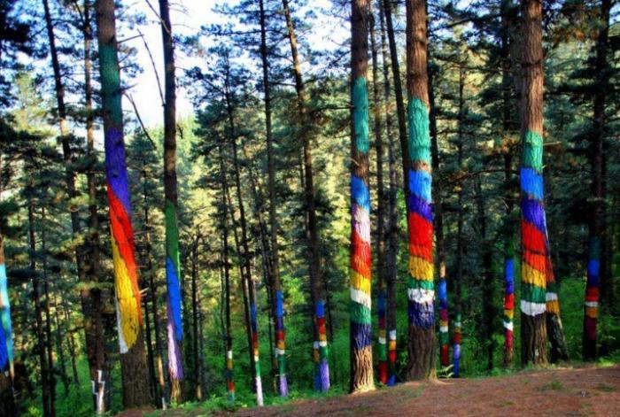 Представляющий собой сотни разукрашенных в яркие цвета сосен, лес превратился в живую канву, которую