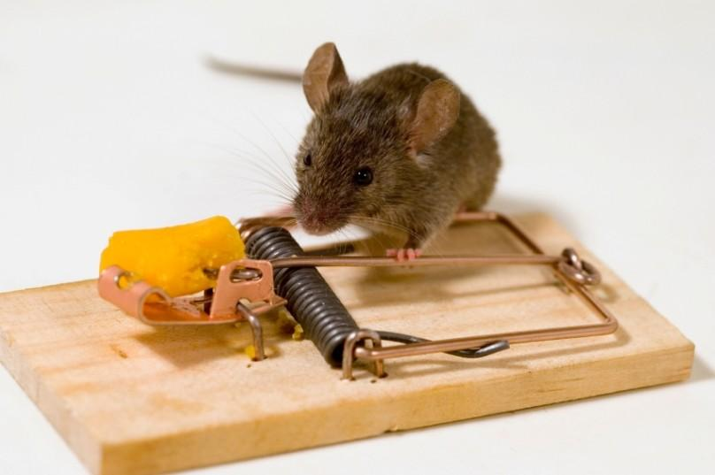 Мышеловка Не дай бог в вашем доме заведутся мыши. Избавиться от них будет настоящей проблемой. И есл