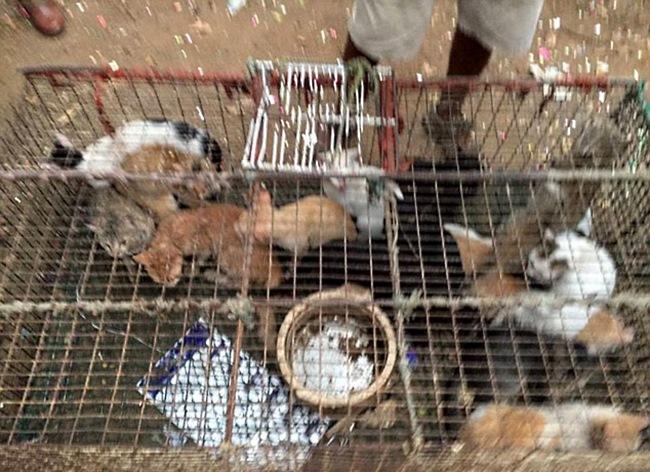 Животные содержались в ужасных условиях. Многие из кошек были больны, однако никого из поваров не см