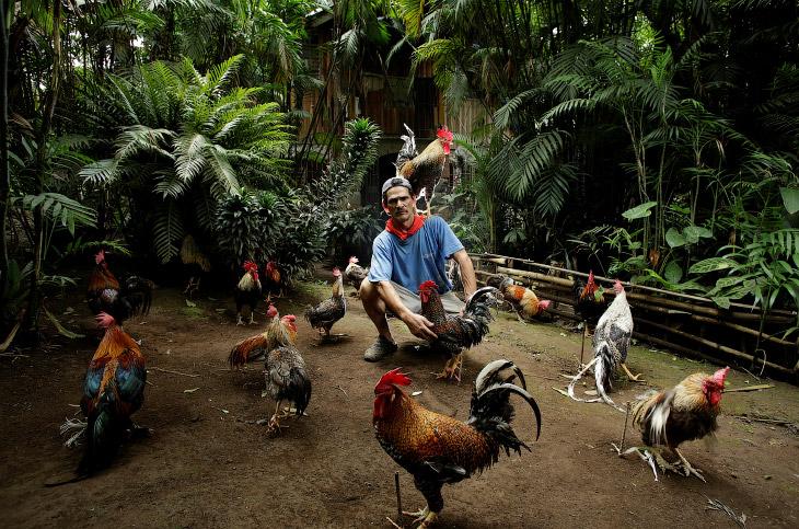1. Мы находимся в Коста-Рике. Прогуляемся вместе с петухом и его хозяином по улицам. 27 апреля