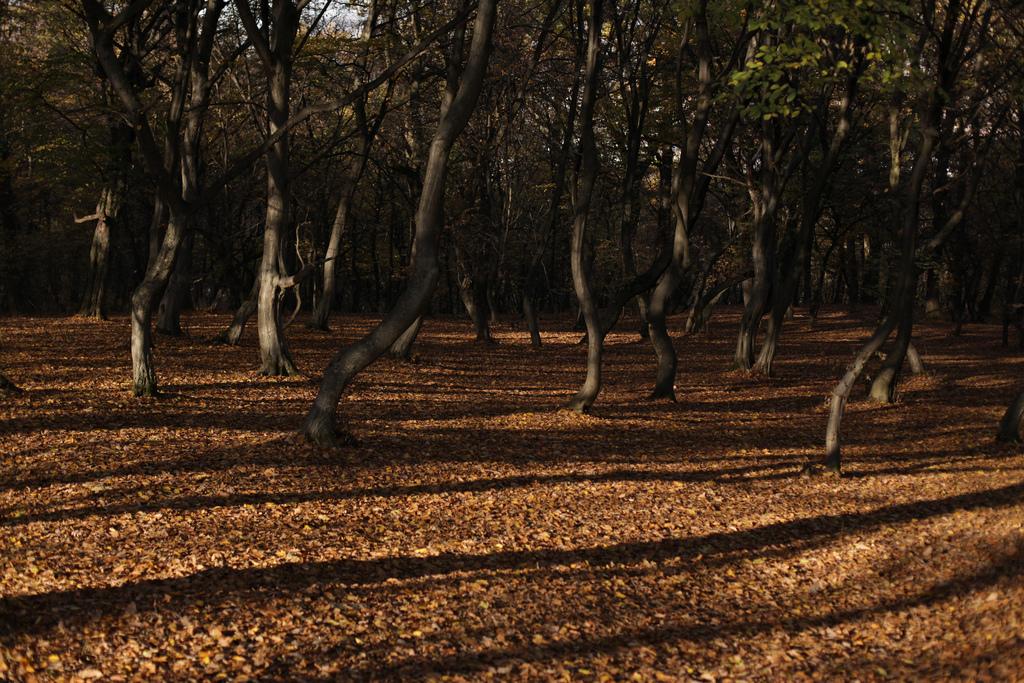 Лес назападе румынского города Клуж-Напока заслужил репутацию паранормального места благодаря регул