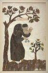 illustrations-anciennes-toutes-en-plumes-400-ans-16-717x1080.jpg