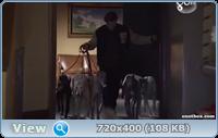 12 рождественских собак2 / 12 Dogs of Christmas: Great Puppy Rescue (2012/TVRip)