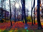 Осень в Солнцево