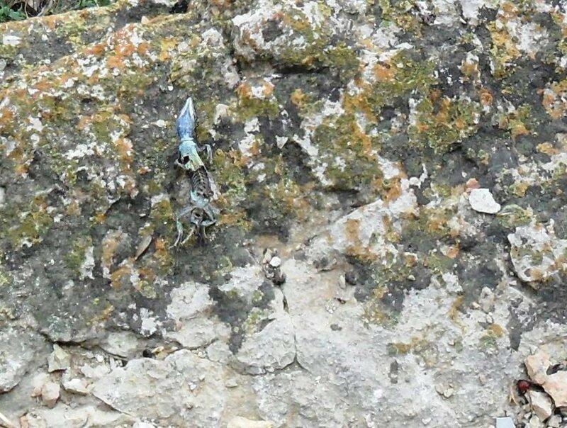 На скале...  SAM_0705.JPG