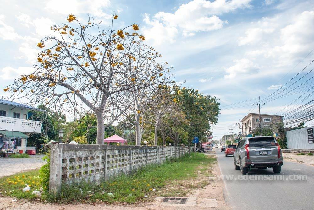 Дерево с желтами цветами Таиланд