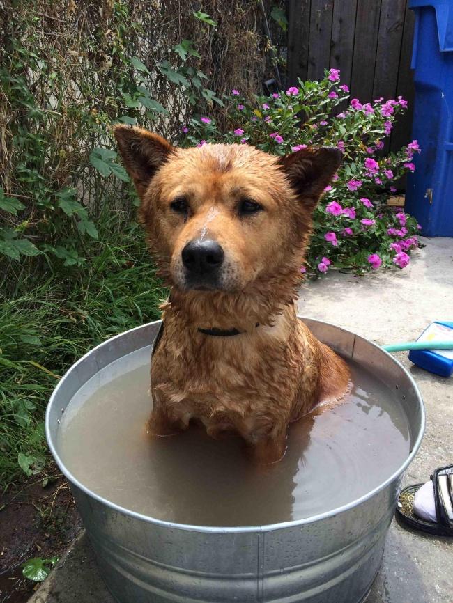 © theOGofthewest  Еслибы умоей собаки была страничка всоцсетях, она моглабы поставить это