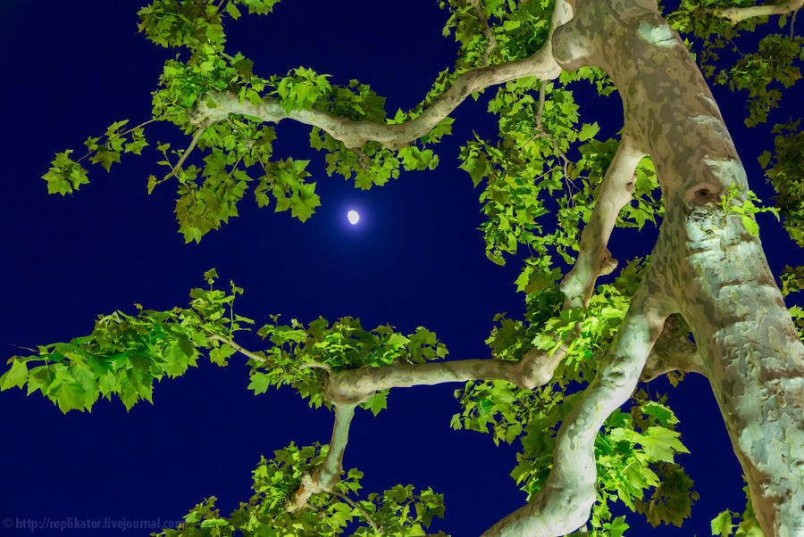 20. Задумывая тёмные дела, на небе ухмыляется луна.