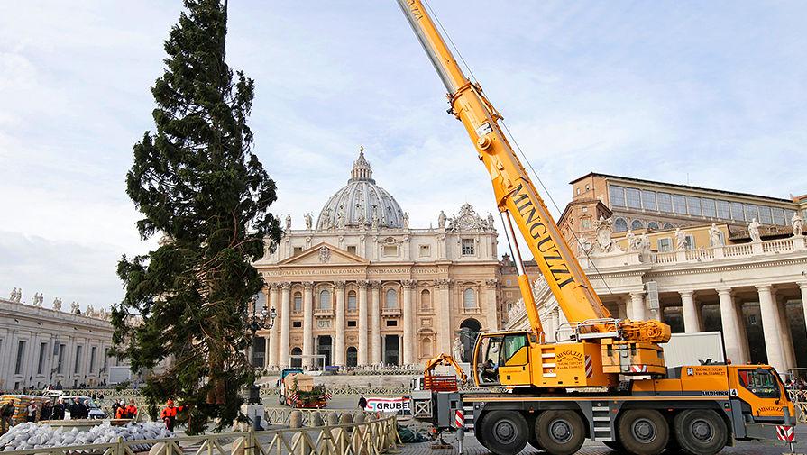 Рождественская ель на площади Святого Петра в Ватикане