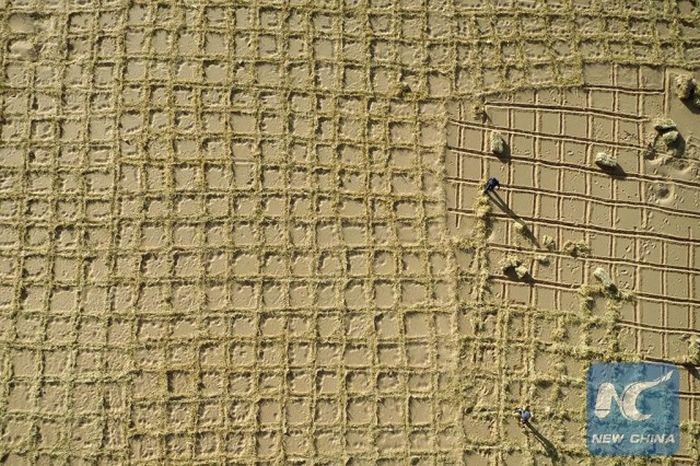 Зеленый пояс остановит расширение китайской пустыни Тэнгэр
