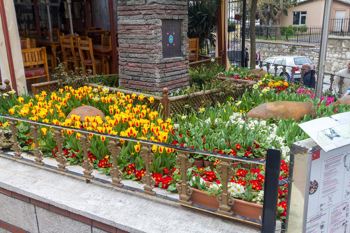 Тюльпаны Стамбул фото 3