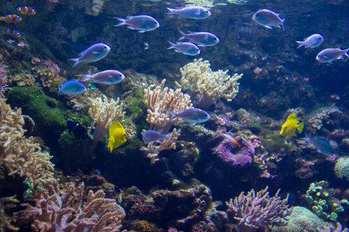 Адлер 2016. Океанариум