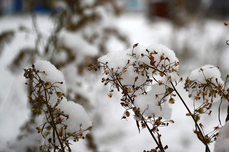 цветы в снегу 19.jpg