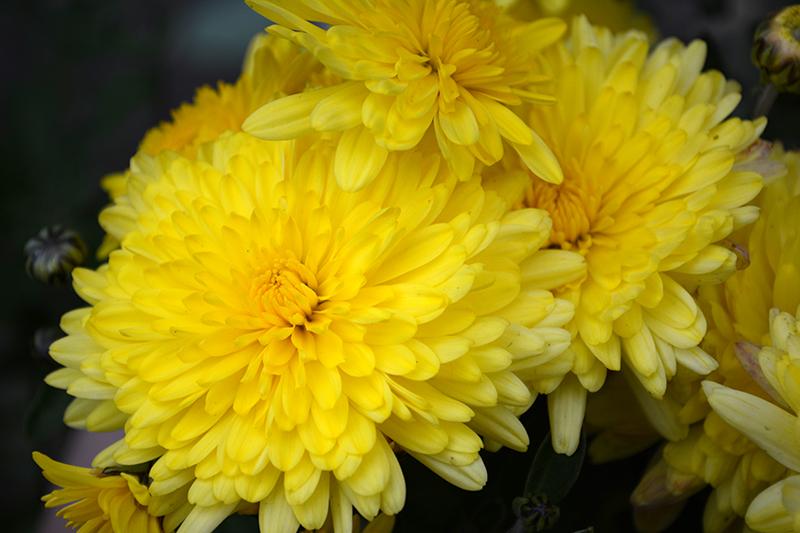 цветы дождь 3.jpg