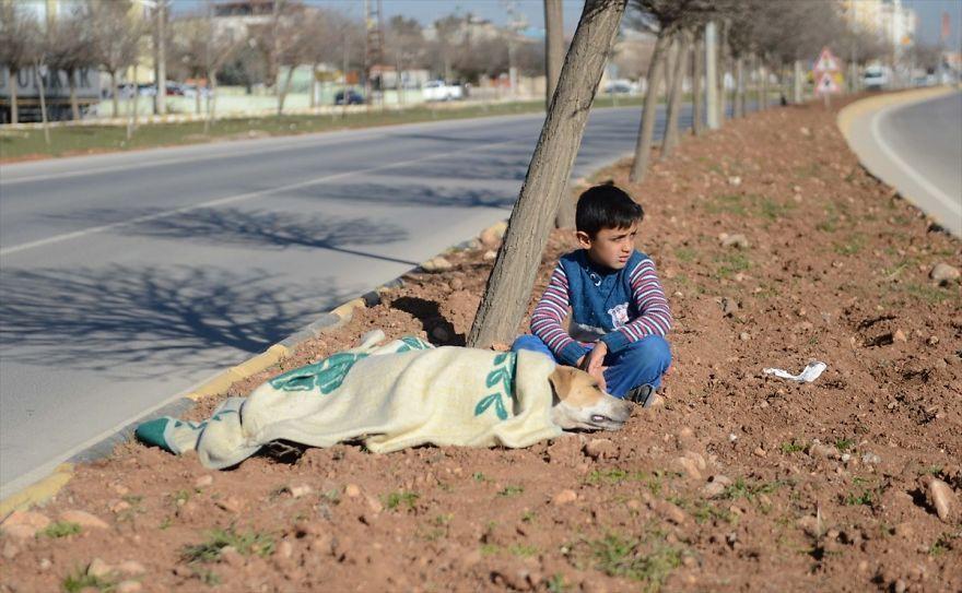 Мальчик-беженец из Сирии отказался покинуть раненого бездомного пса до прибытия помощи