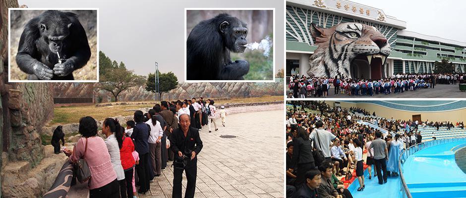 Уникальные кадры из зоопарка Северной Кореи