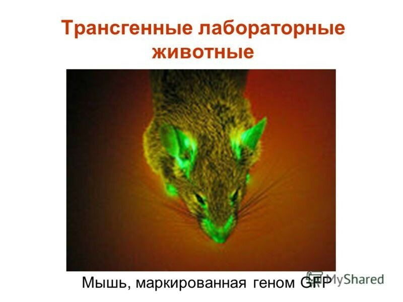 https://img-fotki.yandex.ru/get/195125/158289418.416/0_17a273_91586ba3_XL.jpg