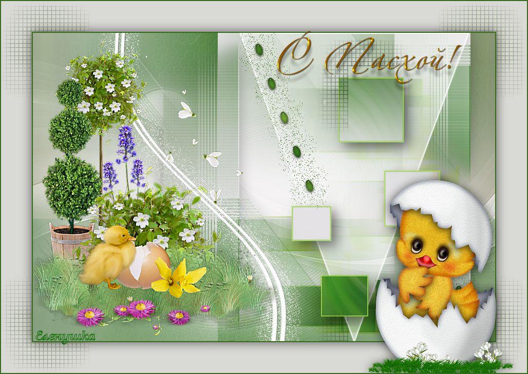 Alpha-Easter-VSP.jpg