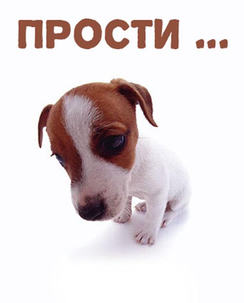 месяц картинки с собаками прости меня пожалуйста картинки