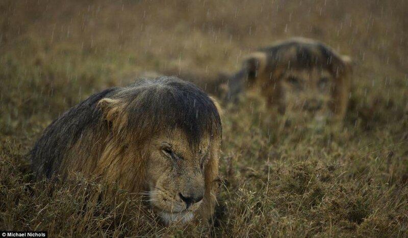Среда обитания животных   невозможные конкурсные фотографии!