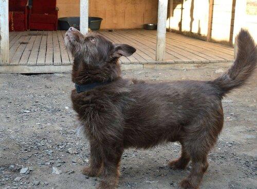 Бренди собака из приюта москва