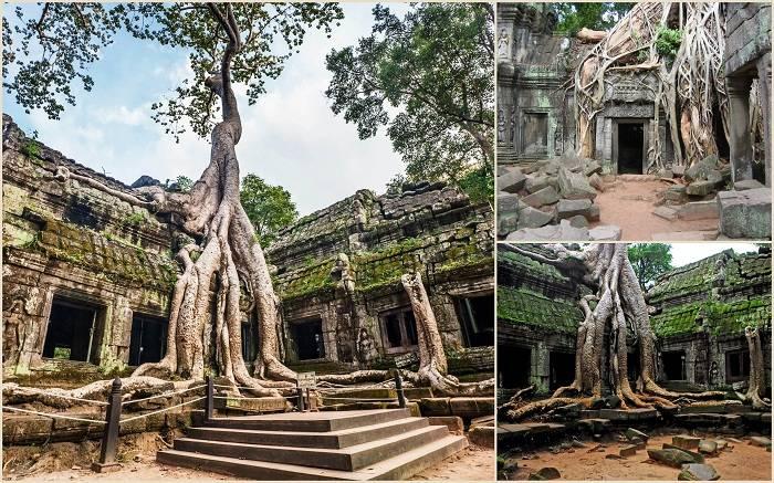 Та-Пром это современное название храма в Ангкоре, расположенного в провинции Сиемреап (Камбоджа). Хр