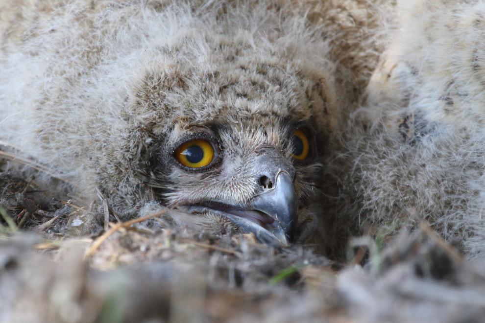 3. А это вырубленный участок леса, на котором раньше гнездились эти огромные совы. Моя коллега
