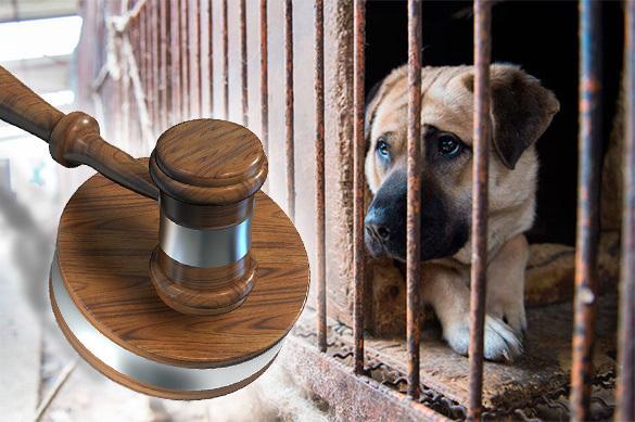 ВХабаровске суд рассматривает дело о беспощадном убийстве животных