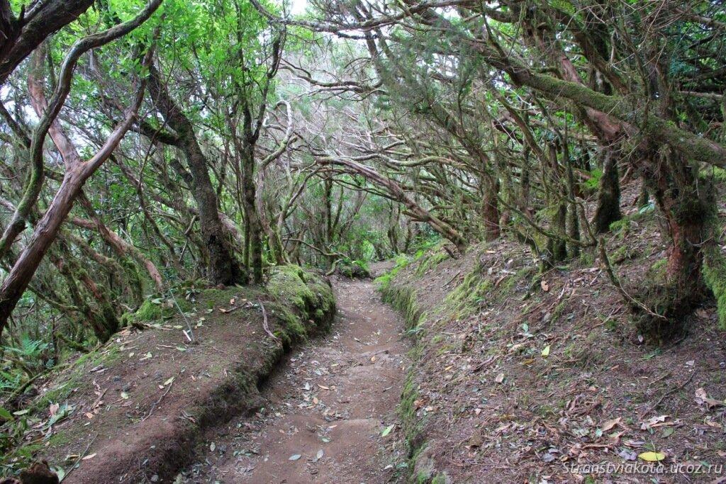 Север Тенерифе, лавровый лес