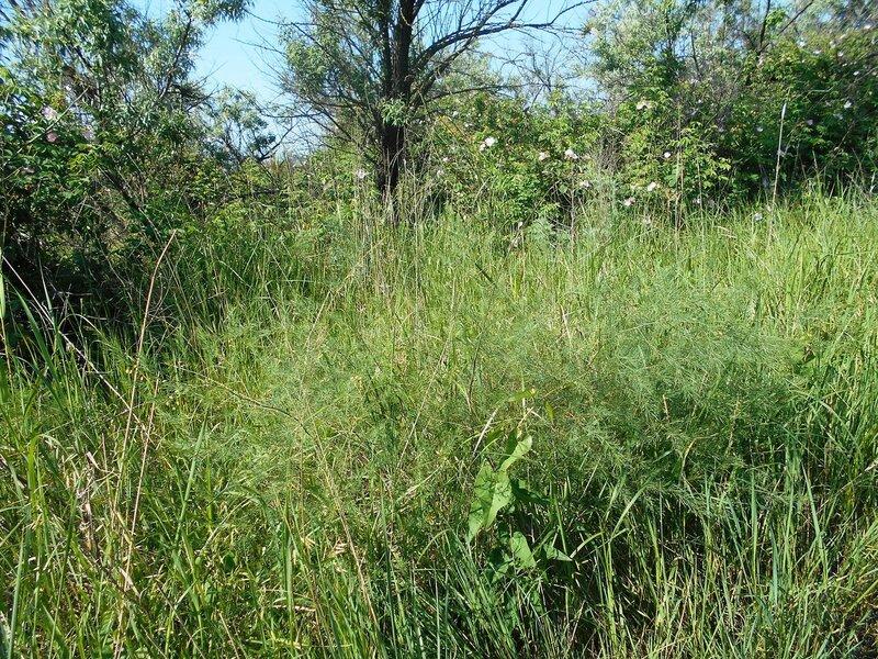 Цветов и трав весеннее обилие ... DSCN5659.JPG