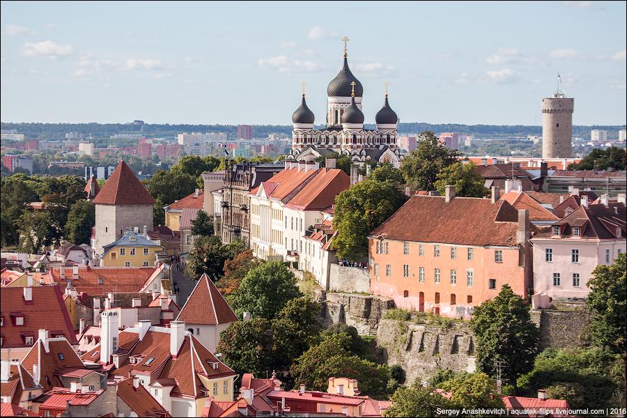 Таллинские крыши