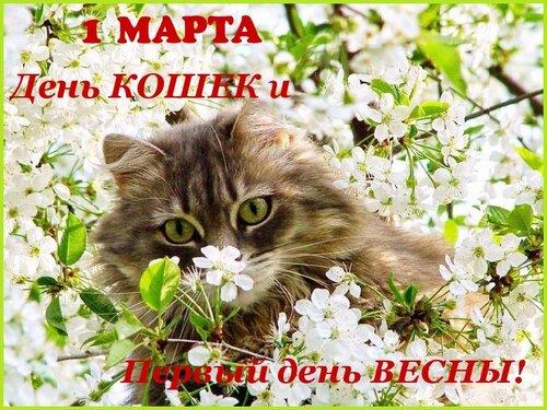 С ДНЕМ КОШЕК И ПЕРВЫМ ДНЕМ ВЕСНЫ!!!