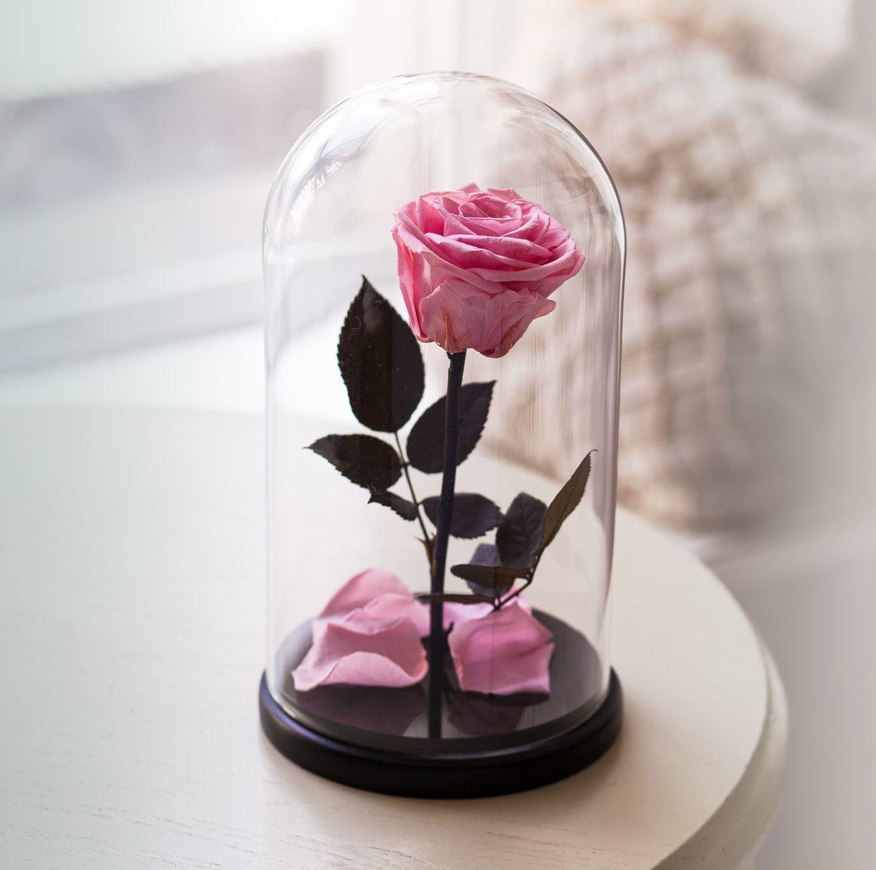 Цветы в вакууме купить дешево в спб