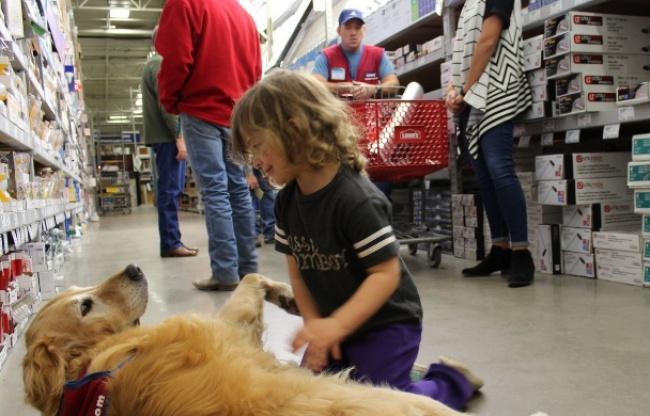 © reporternews  Шарлотта, 10-летний золотистый ретривер, вот уже 2месяца ходит наработу вмес