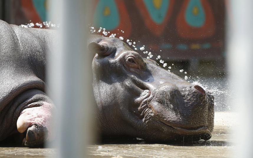 5. Лучше к крокодилу, чем к ребенку. По словам Ричарда Джонса, автора снимка, он поймал момент