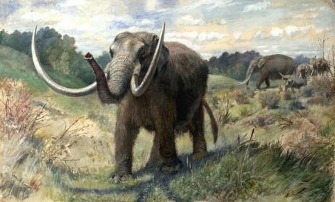 Вкалифорнийском метро отыскали останки мастодонтов возрастом 10 тыс. лет