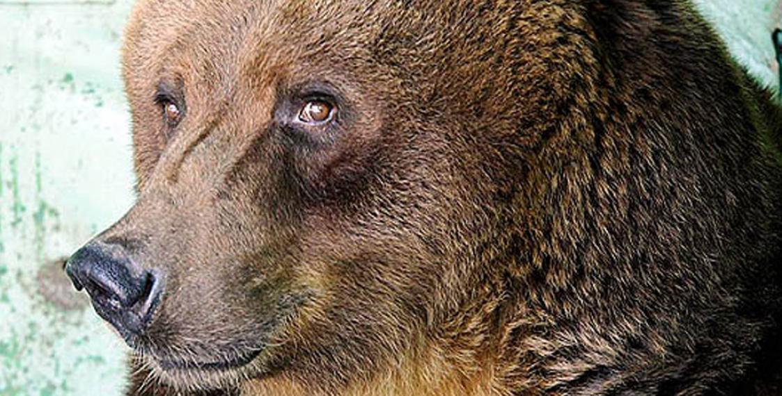 Медведица набросилась научастницу съемок шоу «Про любовь»— YouTube ВИДЕО