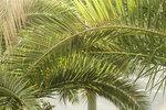 608.JPG-07.jpg Пальмовое.