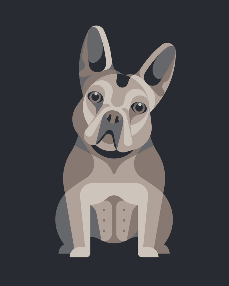 Dog Breed Illustrations by DKNG