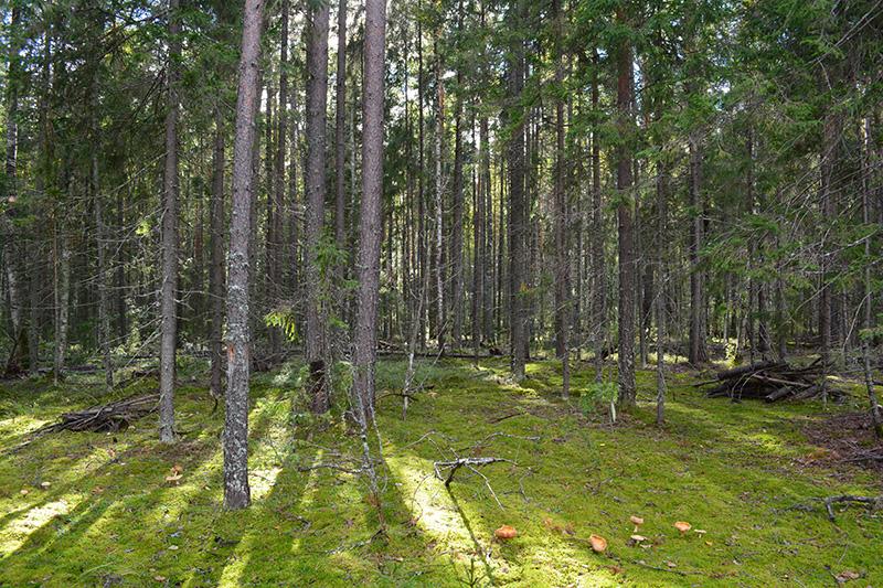 мой лес 16 11.jpg