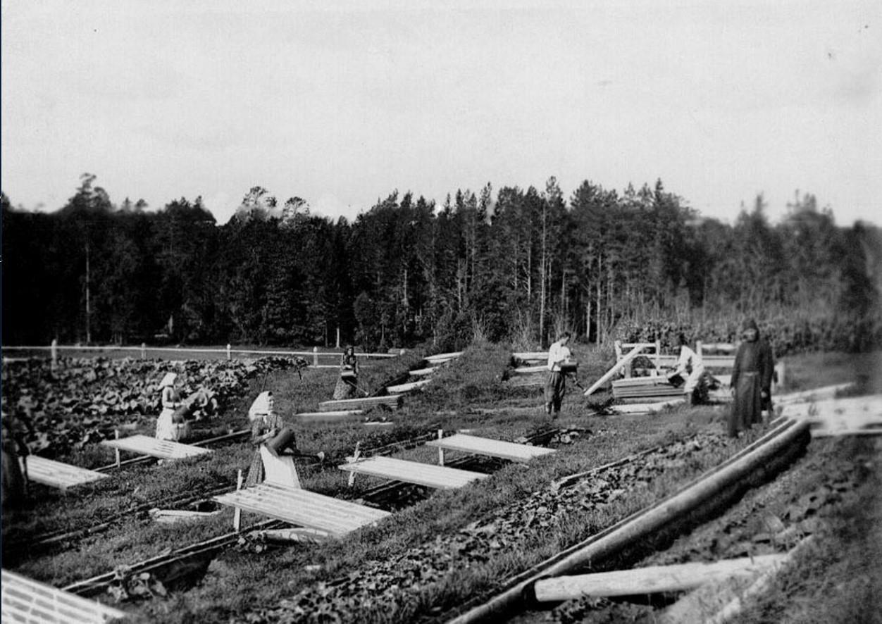 20. Работники за поливкой огорода в парниковом хозяйстве монастыря