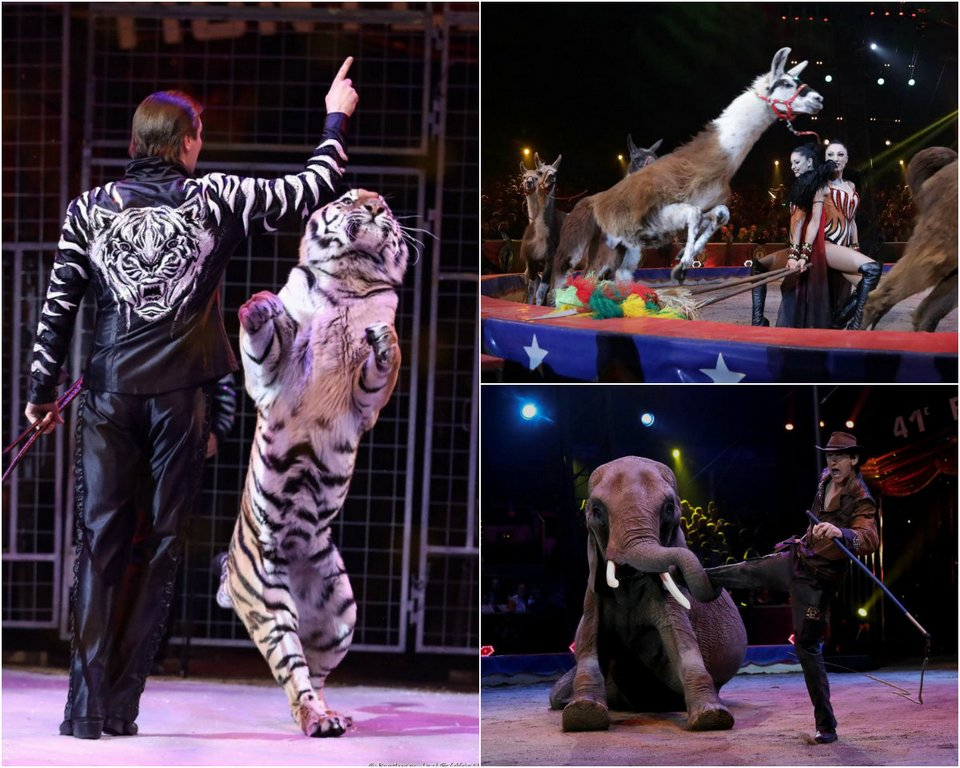 41-й Международный цирковой фестиваль в Монте-Карло