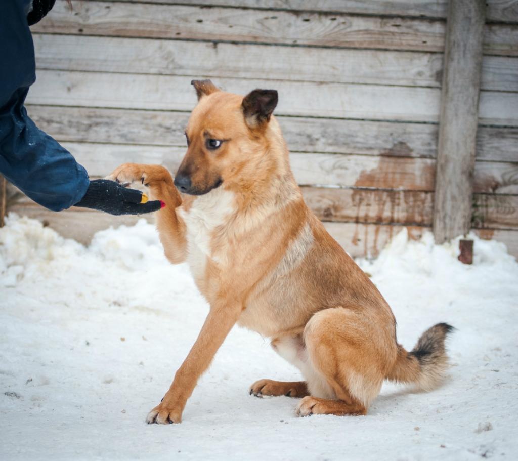 Морс собака из догпорта