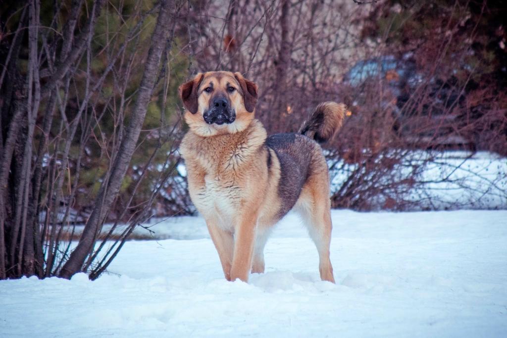 Грант собака из приюта догпорт